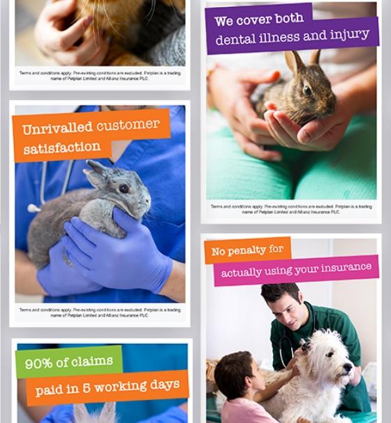 Petplan Best Care social posts